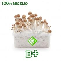 venta online pan setas b+