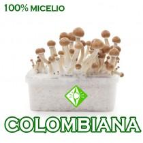 venta online pan setas colombianas