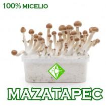 venta online pan setas mazatapec