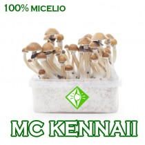 venta online pan setas mc kennaii