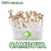 venta online pan setas camboyanas