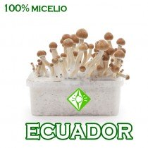 venta online pan setas ecuatorianas