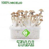 venta online pan setas tailandesas