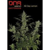 60 Day Lemon - DNA