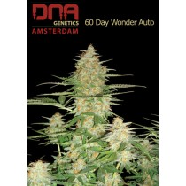 60 Day Wonder Autoflower - DNA