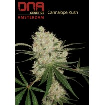 Cannalope Kush - DNA