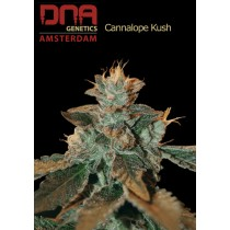 Cataract Kush - DNA