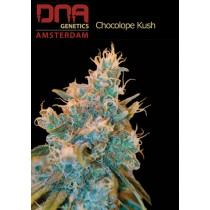 Chocolope Kush - DNA