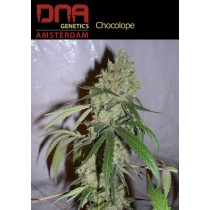 Chocolope - DNA