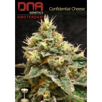 Confidential Cheese - DNA