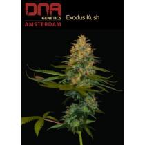 Exodus Kush - DNA