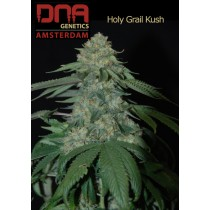 Holi Grail Kush - DNA