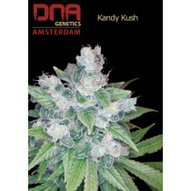 Kandy Kush - DNA