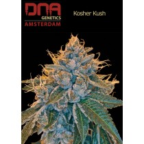 Kosher Kush - DNA
