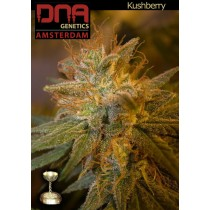 Kushberry - DNA