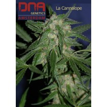 La Cannalope - DNA