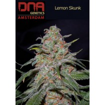 Lemon Skunk - DNA