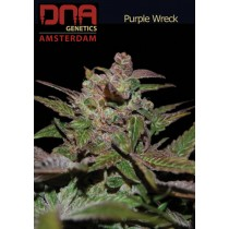 Purple Wreck - DNA