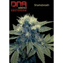 Sharksbreath'09 - DNA