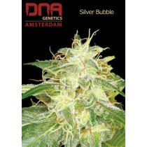 Silver Bubble - DNA