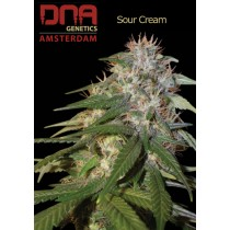 Sour Cream - DNA