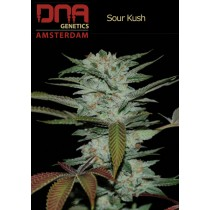Sour Kush - DNA