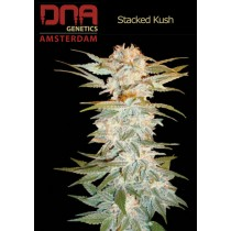 Stacked Kush - DNA