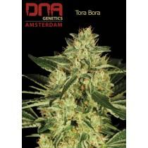 Tora Bora - DNA
