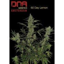 60 Day Lemon - DNA