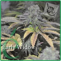 Early Widow – Elite Seeds