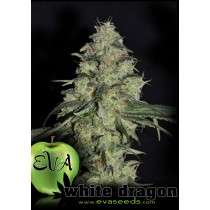 White Dragon - Eva Seeds