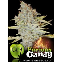 furious-candy-eva-seeds