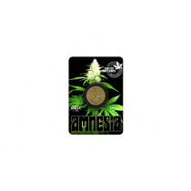 Moneda Hash Amnesia CBD
