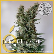 Jack - Ultra CBD - Elite Seeds