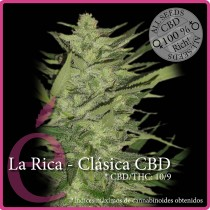 La Rica Clasica CBD – Elite Seeds