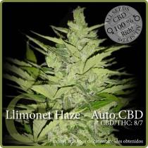 Llimonet Haze Auto CBD - Elite Seeds