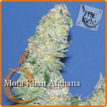 Mota Khan Afghana – Elite Seeds