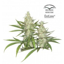 Outlaw – Dutch Passion