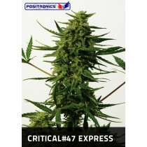 Critical #47 Express Femeninas Positronics