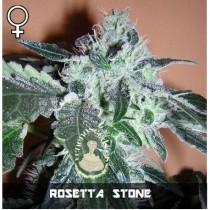 comprar semillas feminizadas rosetta stone de veneno seeds