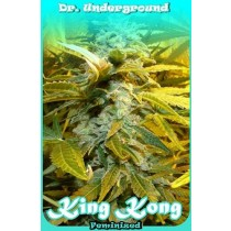 King Kong – Dr. Underground
