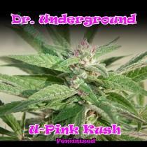 U-Pink Kush – Dr. Underground
