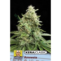 Amnesia Gold – Kera Seeds