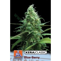 Blueberry White – Kera Seeds