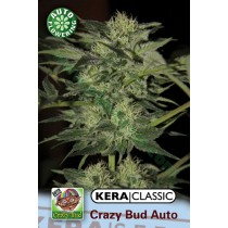 Crazy Bud – Kera Seeds