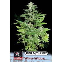 White Widow – Kera Seeds