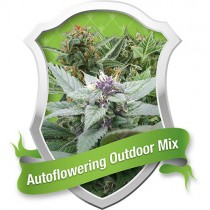 Autoflowering Outdoor – Royal Queen