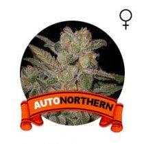 comprar auto northern semillas