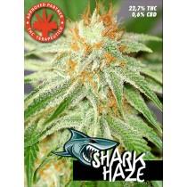 Shark Haze – Pure Seeds