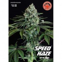 comprar semillas speed haze de pure seeds